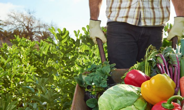 Eating food grown organically without the aid of pesticides can help reduce the body's toxic load. (Shutterstock*)