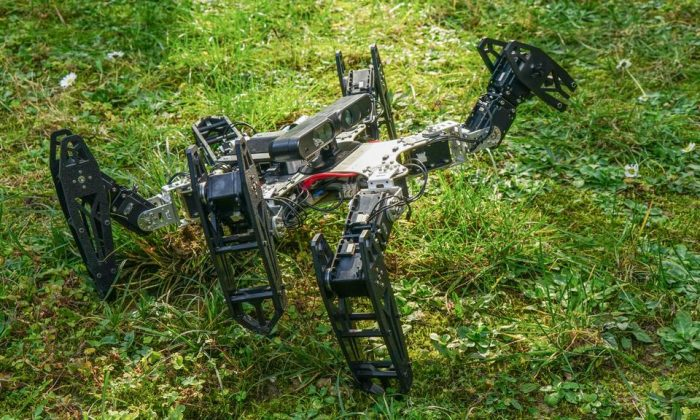 A hexapod with a broken leg  (Antoine Cully / UPMC).