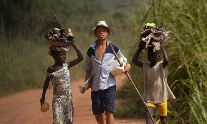 Children living in a cocoa producing village walk back from the fields on the outskirts of the town of Oume, Ivory Coast. Chinese direct investment in Africa has shrank considerably during China's economic slowdown. (AP/Photo Schalk van Zuydam)