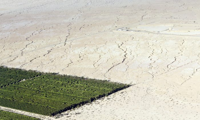 The Imperial Valley's half-million acres of verdant fields end abruptly in pale dirt that gets three inches of rain annually on average. (AP Photo/Gregory Bull)