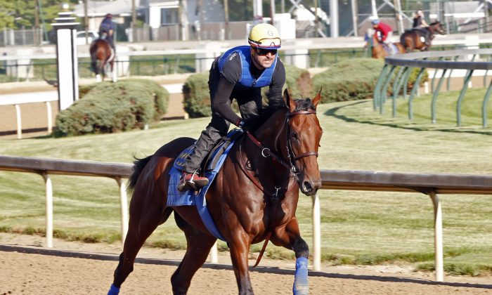 In this photo released by Churchill Downs, American Pharoah, ridden exercise rider Jorge Alvarez, works out at Churchill Downs Friday, May 22, 2015, in Louisville, Ky. (Reed Palmer Photography/Churchill Downs via AP)