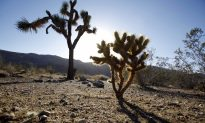 Man Sentenced to Five Years in Jail After Starting Fire at Joshua Tree