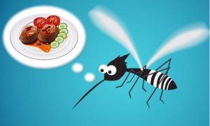 What Attracts Mosquitoes and How to Repel Them (Video)