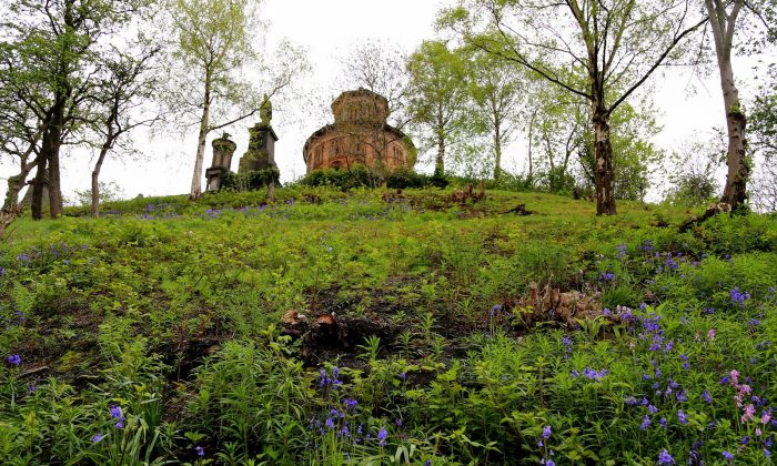 This May 11, 2015 photo shows bluebells in bloom at Glasgow's Necropolis, a 37-acre site that is home to thousands of graves. in Glasgow, Scotland. (Michelle Locke via AP)
