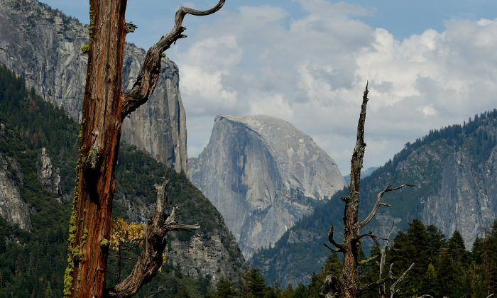 Dead trees are in front of the Half Dome monolith at the Yosemite National Park in California on June 3, 2015.  Even Yosemite National Park cannot escape the drought ravaging California, now in its fourth year and fueling growing concern. (Mark Ralston/AFP/Getty Images)
