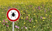 Powassan Virus, a Deadly Tick Disease