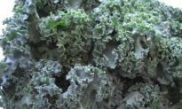 Massaged Kale Salad: 5 Minutes To Bliss!