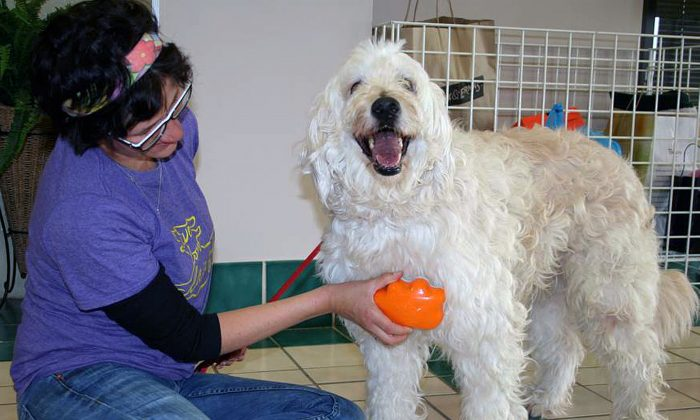In this May 14, 2015 photo provided by Brad Webb, an employee at the Capital Area Humane Society in Columbus, Ohio, brushes adoptable dog Princess with an orange Groom Genie. (Brad Webb via AP)