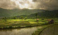 Rote Island East of Bali
