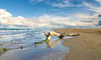 Secrets of Spain: The Delightful Delta de L'Ebre