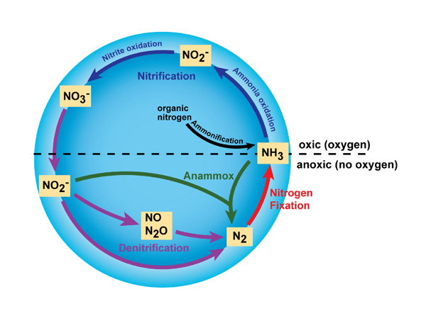 The biological and physical processes that make up the nitrogen cycle. (KoiQuestion, CC BY-SA 2.0)