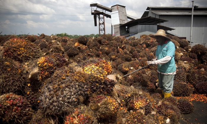 Efforts to Produce Palm Oil Sustainably Are Actually Profitable for Businesses, Study Finds