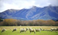Where to Have a Luxury Holiday in New Zealand