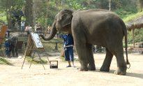 Amazing Elephant Draws Better Than Most Humans!