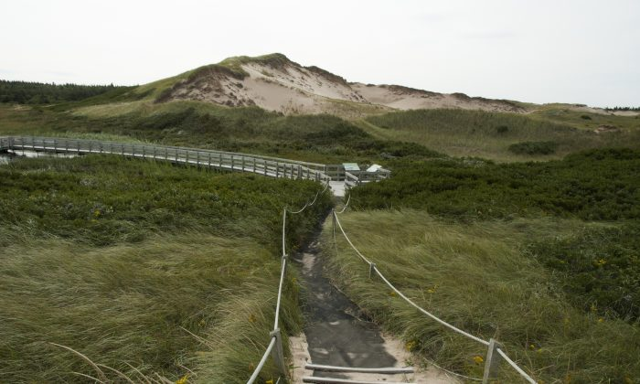 Boardwalk at the Greenwich Dunelands Trail, part of Prince Edward Island National Park. The Greenwich section of the park consists of floating boardwalks, parabolic dunes, several sandy beaches, and rare flora and fauna. (Carole Jobin)