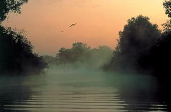 Mist at Yellow Water billabong – Kakadu. (Courtesy NT Tourism)