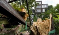 Anne Frank's Chestnut Tree Collapses