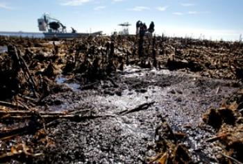 Oil is seen deposited along dead marsh land in Port Sulphur, Louisiana. (Sean Gardner/Getty Images)
