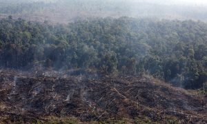 Fires Rage in Indonesian Park Illegally Trashed for Palm Oil