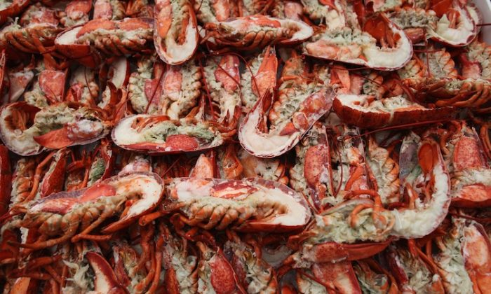 Lobsters are prepared to be grilled on June 22, 2011 in London, England. (Dan Kitwood/Getty Images)
