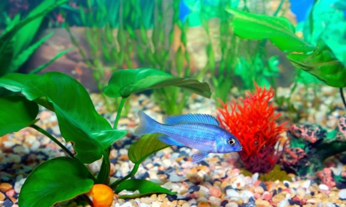 The next time you are redecorating, why not consider an aquarium? With colourful coral, a variety of aquatic plants, and the graceful movement of the fish as they glide through the water, an aquarium can make a room come alive and add a new dimension. You can have an underwater marvel right in your living room. (Photos.com)