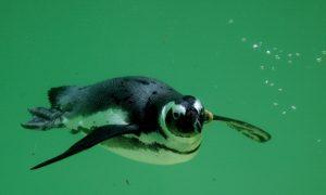 Wayne Newton Animals: Sloths, Penguins Sold