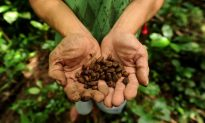 After Period of Gains, Coffee Prices to Stabilize