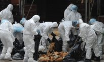 Chinese Regime Confirms Two New Cases of Bird Flu