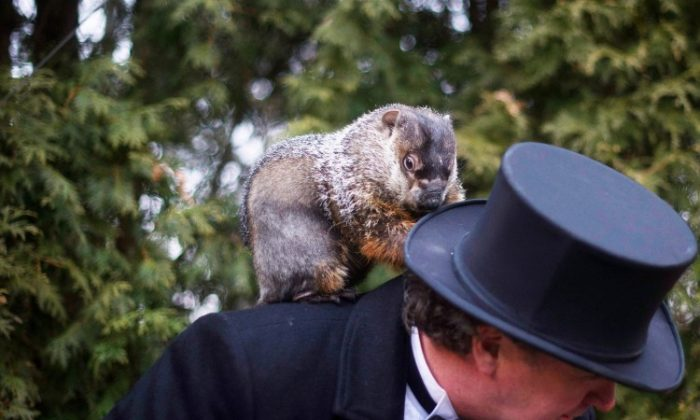 Groundhog handler Ron Ploucha holds Punxsutawney Phil after he saw his shadow predicting 6 more weeks of winter during 126th annual Groundhog Day festivities on Feb. 2 in Punxsutawney, Penn. (Jeff Swensen/Getty Images)