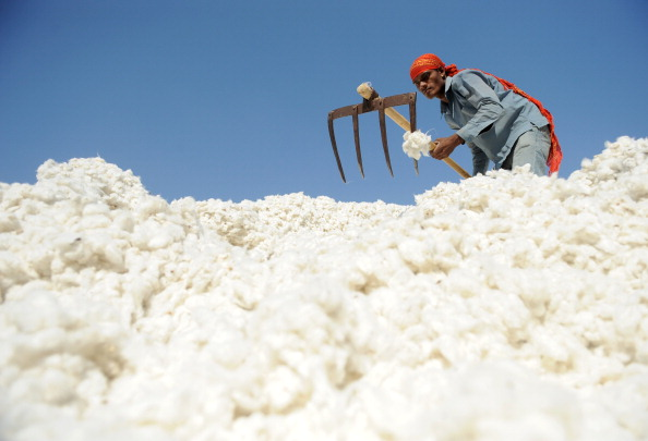 An Indian worker sorts cotton at Patel Cotton Industries, Ginners and Exporters, in Dhrangadhra in December. (Sam Panthaky/AFP/Getty Images)