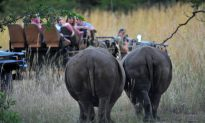 South Africa Seizes Millions in Rhino Poachers' Assets