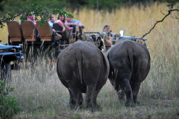 A file photo taken on March 12, 2012 shows two white rhinos standing in Limpopo in South Africa. (Alexander Joe/AFP/GettyImages)