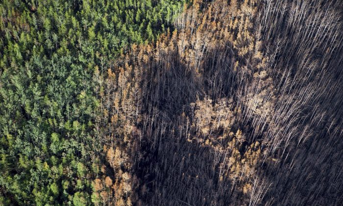 An aerial view of burned forest near Weyakwin, Saskatchewan, on July 15, 2015. About 1,000 fire evacuees in Saskatchewan have received the all-clear to head home. (The Canadian Press/Pool/Liam Richards-The StarPhoenix)