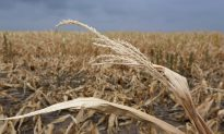 Americans To Face Higher Food Prices