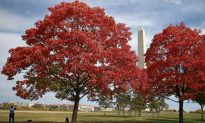 Fall Foliage Spreads Around Nation's Capital (Photo)