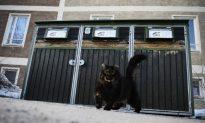 Swedish Police Stuck Chasing Cats