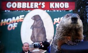 Groundhog 'Indicted:' Punxsutawney Phil Charged With Fraud