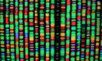 DNA: The Divine Message