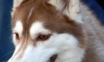 New UK Plans to Tackle Dangerous Dogs