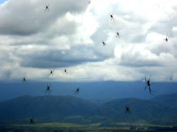 Throughout history many have witnessed showers of animals falling from the sky.  This rain of spiders in Argentina was captured on film earlier this year.  (Christian Oneto Gaona)