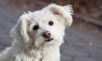 ASPCA Defends Pet Food Stamps