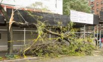 Lessons From Downed Trees in NYC