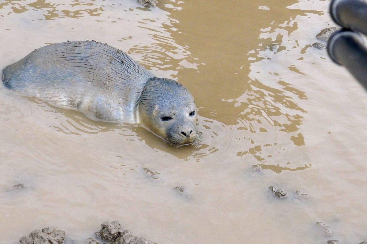 (Natureland Seal Sanctuary)