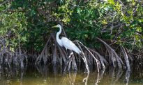 Can Mangrove Forests Save Coastal Areas?