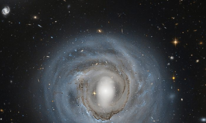 """The evidence for this is that dust filaments in the HST (Hubble Space Telescope) image look like taffy being stretched out,"" says Jeffrey Kenney. ""We're seeing this decoupling, clearly, for the first time."" Above, Hubble Space Telescope image of a spiral galaxy in the Coma cluster. (NASA, ESA, and Roberto Colombari)"
