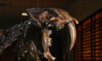 Ice Age Predators Didn't Die Out From Starvation