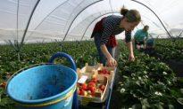 East European Migrant Workers Flee to Avoid Economic Crisis