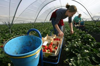 East European Migrant Workers Flee to Avoid Economic Crisis
