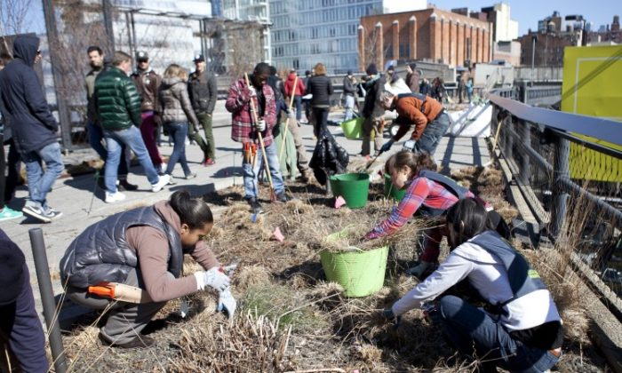 Ten teenagers from the Highline Green Corps program, as well as park volunteers helped clean out the dried grass on the Highline on March 27. (Samira Bouaou/The Epoch Times)