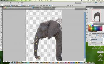 A picture of an elephant with the Puppet Warp feature applied to it in Adobe Photoshop CS5. (Joshua Phillip/The Epoch Times)